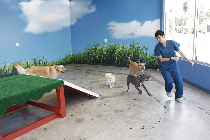 West Hollywood Animal Hospital Day Care