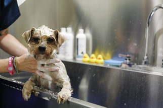 West Hollywood Animal Hospital Grooming